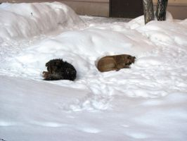Dogs in snow by birographic