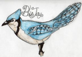 Blue Jay by Disimprison