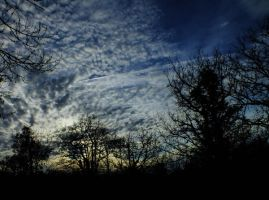 Sky and trees - 56A by HermitCrabStock