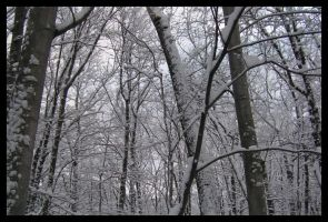 Frantic Maelstrom of Winter by Fring