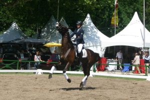Dressage Canter Stock by LuDa-Stock