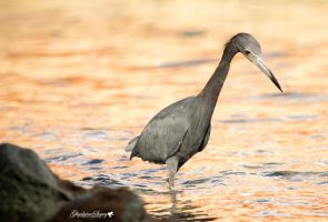 Good morning Mr Heron by gigi50