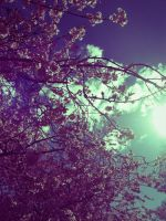 Spring Time by Lesbehonest