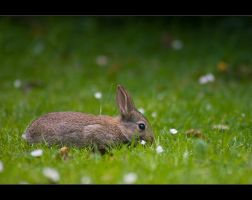 Rabbit On by light-recycled