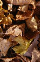 Last beech leaves.. by 7DS7