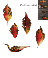Autumn Leaves by Csyyt