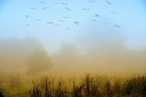 Autumn migrations by dgheban