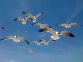 Seagulls by FOVDPhotography