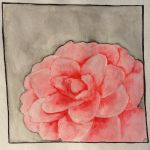 Camellia by Marlimoo