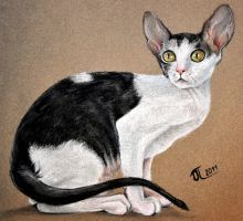 Cornish Rex by Plakitina