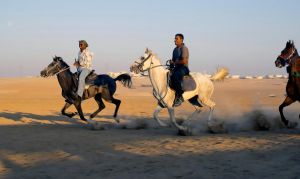 horses in  Bedouin Wedding by haimohayon