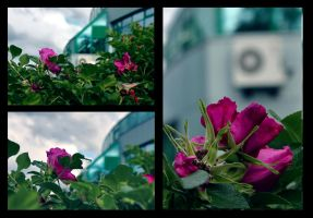 Flowers by Arina1