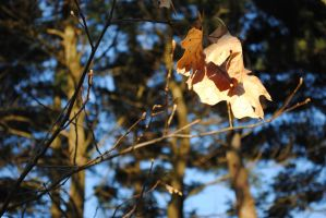 Glowing Leaves by GillianIvy
