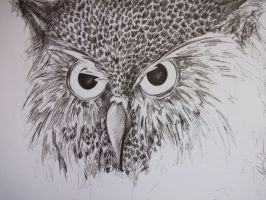 Owl sketch by Sanavy
