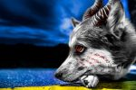 Infected Husky by atmp