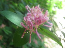 pink flowers-nameless 01 by CotyStock