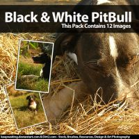 44mb PitBull Stock Photo Pack by KeepWaiting