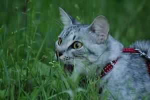Duuude... So much grass... by Baltagalvis