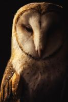 Barn Owl by SaddlePatch