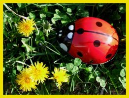 Lady Bug by RainbowsandDaydreams
