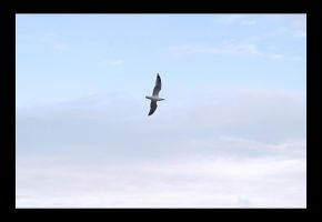 Flight. by Vocal-Image