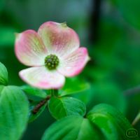 MyLittle Blossom... by GlenRoberson