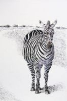 Racing Stripes by spudsy2