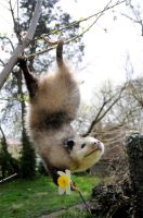 Opossum Mount by Meddling-With-Nature