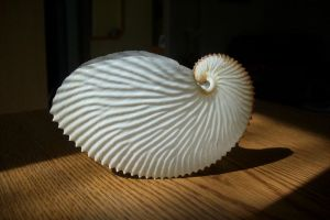 Paper Nautilus shell stock by candy-lace-stock