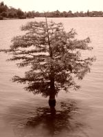 Tree in Water by phahn1986