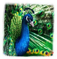 Mothers Day Peacock by DeEtta