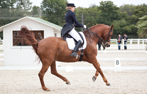Dressage Cup_48 by CalyHoney