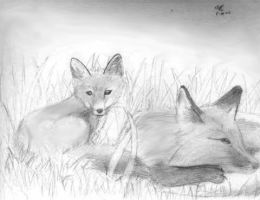 Two Foxes by masterkitsune