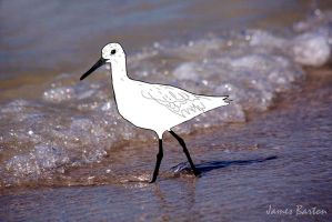 Beach bird 72 dpi by jbcdefg