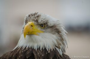 eagle eye by BD-76