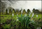 Snowdrops In spring. by Estruda