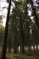 Trees by ThefortyfifthWord