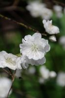 White and Green by amm081