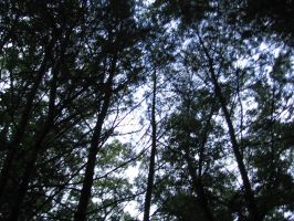 Tree tops 2 by frisbystock