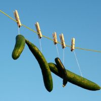 Vegetables on a Washing Line by kaolincash