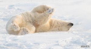 Rolling on the ice by jaffa-tamarin
