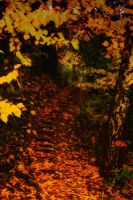 Herbst 05 by Anschi71