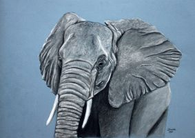 Charcoal Elephant by Tater-Vader