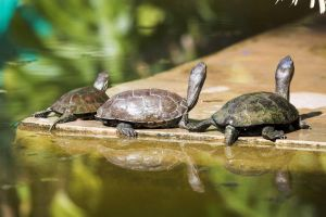 Majorelle Turtles II by syrus