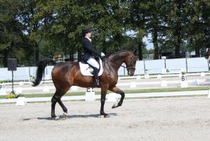 Outdoor Brabant Stock 19 by chronically