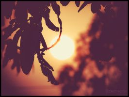 Tree Silhouette by Richi-Ric