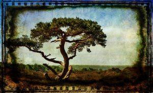 one lonesome tree by awjay