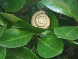 Snail by TheReapersApprentice