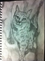 Big Cat by Gottheart