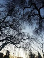 Branches by WolvesHowl457